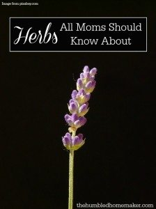 Herbs All Moms Should Know About