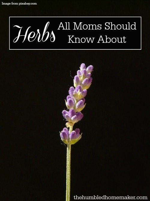 I didn't realize that herbs were so powerful for health and healing! All moms should know about these herbs!