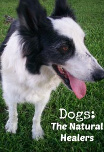 Dogs: The Natural Healers