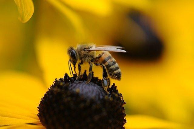 Redmond Clay heals bee stings