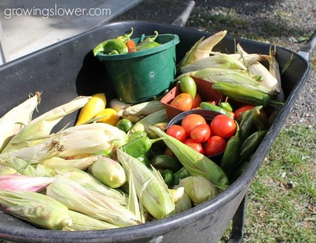 Want to cut your grocery bill? Try starting a garden this year! Here's how to get started.