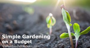 Simple Gardening on a Tight Budget