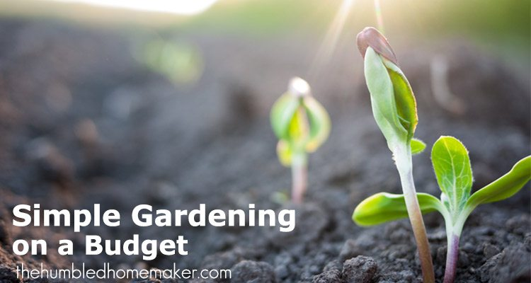 Try these tips for simple gardening on a tight budget to help you save money on groceries and still feed your family healthy, natural vegetables.