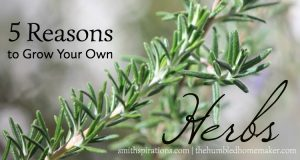 5 Reasons to Grow Your Own Herbs