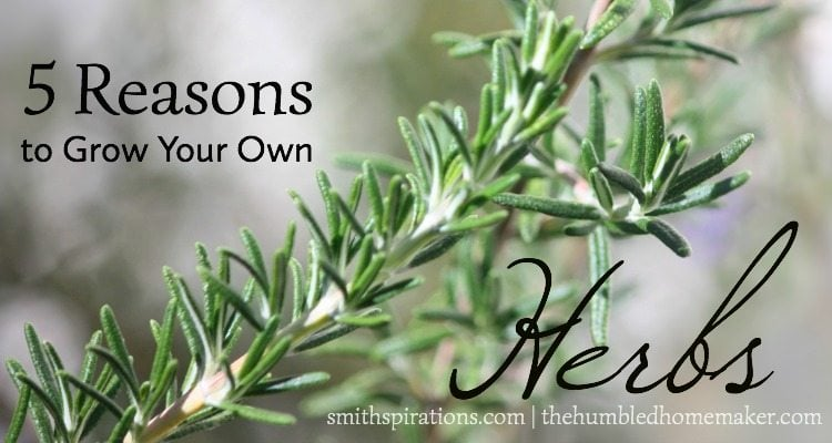 5 Reasons Herbs