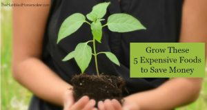 Grow These 5 Expensive Foods to Save Money