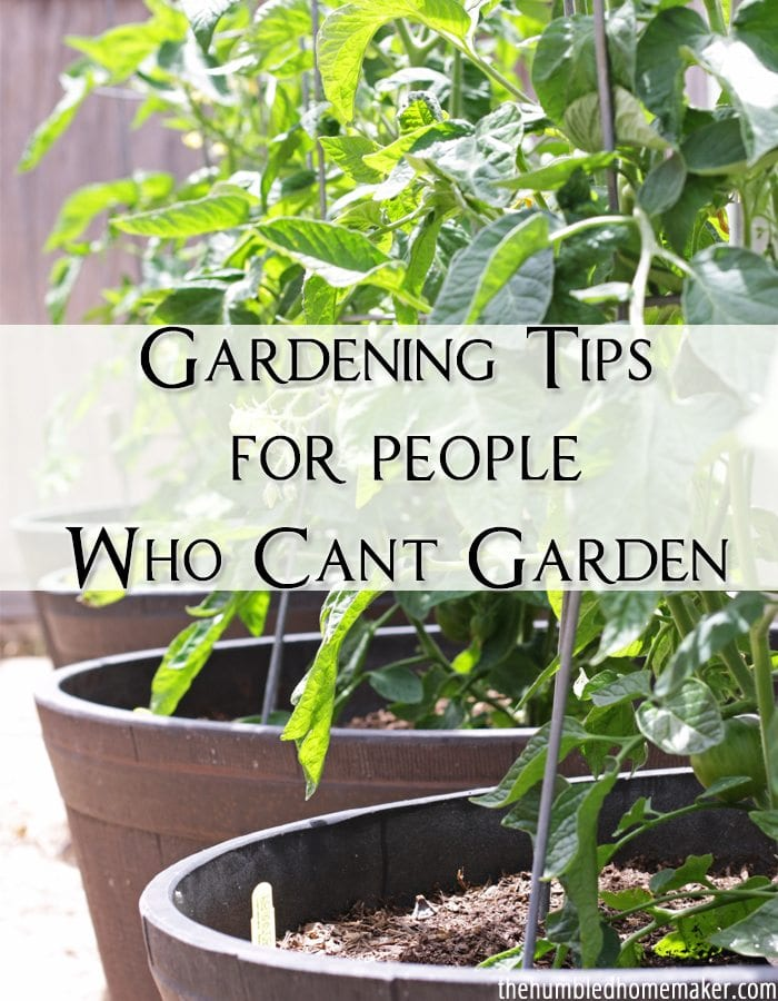 Plants die because gardening isn't easy. If you feel like the world's worst gardener, enjoy these gardening tips for people who can't garden.