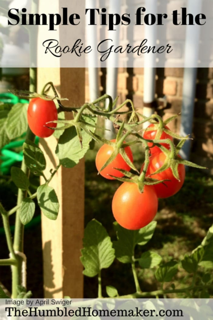 """As a rookie gardener myself, a few simple tips can go a long way. I'm in my third season of gardening, and I finally have a few valuable tips to pass on to those other """"black thumbs"""" who may be too intimidated to try."""