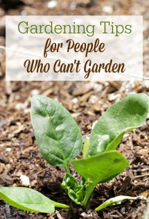 Plants die because gardening isn't easy. If you feel like the world's worst gardener, you need these gardening tips for people who can't garden. You might just find you can get a harvest after all!