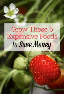 Want to save money by gardening? Start growing these 5 expensive foods to get more bang for your buck! #Gardening #GardenTips #SavingMoney