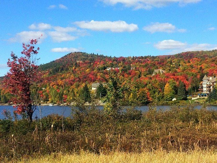 a good walk in fall