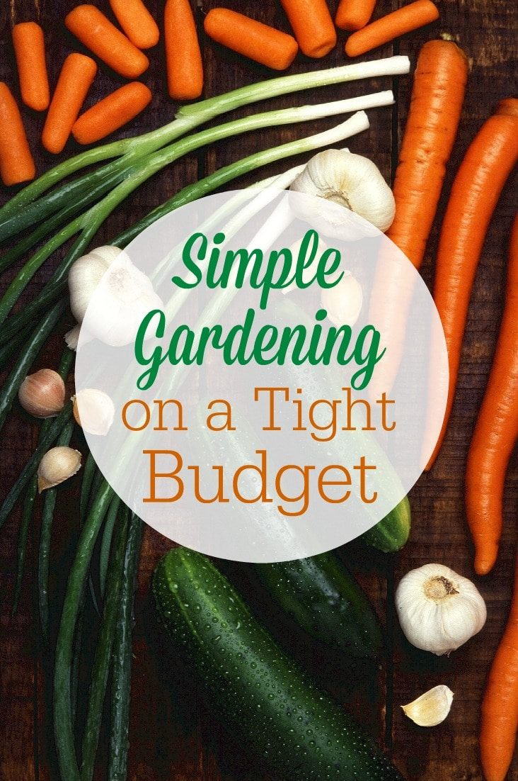 Try these tips for simple gardening on a tight budget to help you save money on groceries and still feed your family fresh, healthy vegetables!