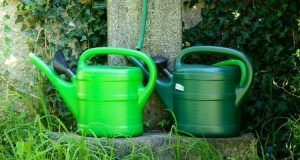 Simple Tips for the Rookie Gardener