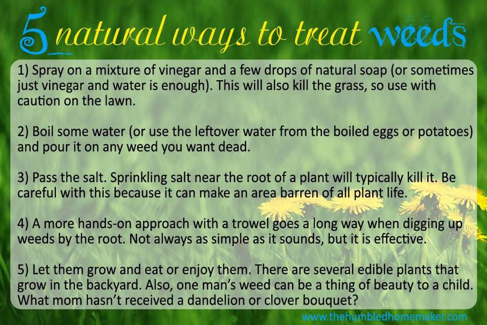 natural ways to treat weeds